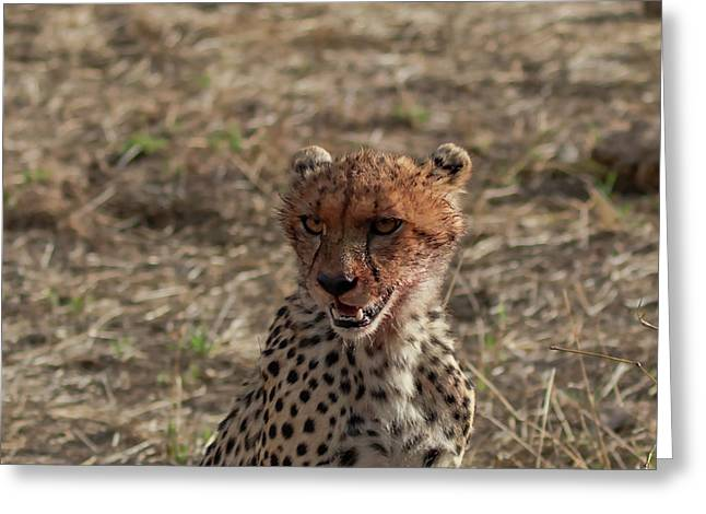 Young Cheetah Greeting Card