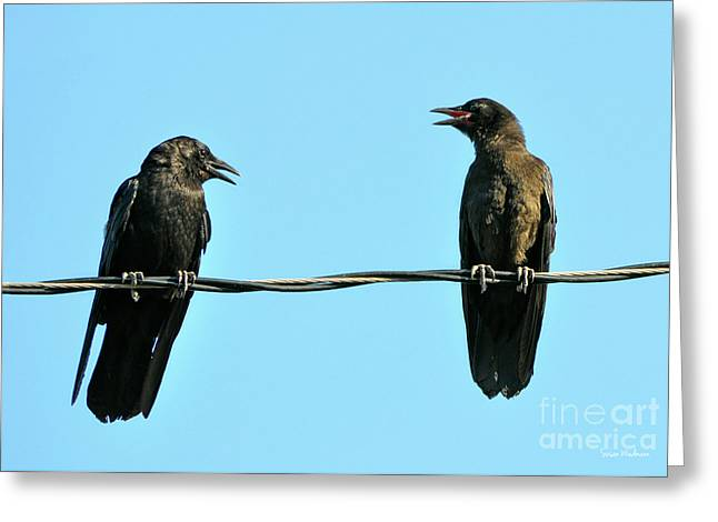 Young Crow Chatting With Mom Greeting Card