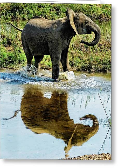 Young Elephant Playing In A Puddle Greeting Card