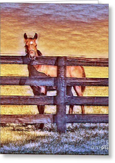 Young Kentucky Thoroughbred Greeting Card