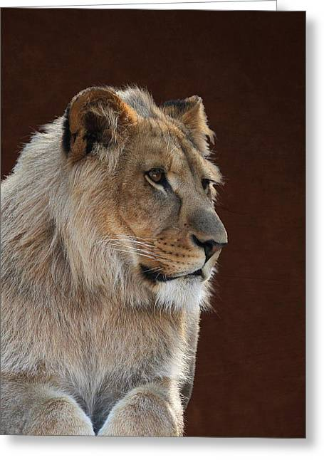 Greeting Card featuring the photograph Young Male Lion Portrait by Debi Dalio
