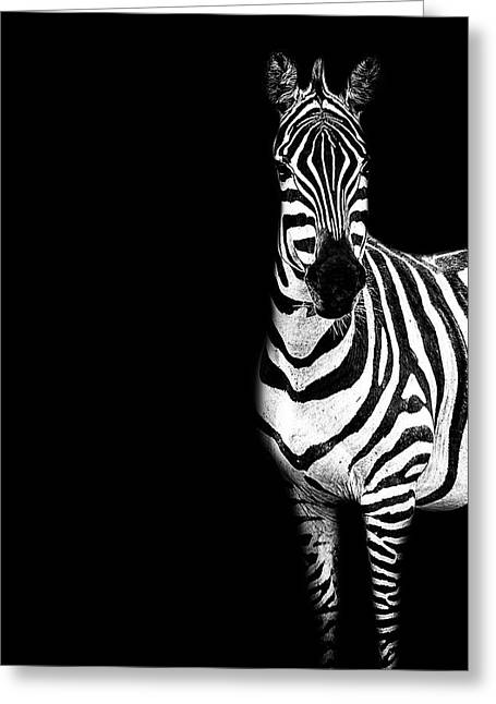 Zebra Drama Greeting Card