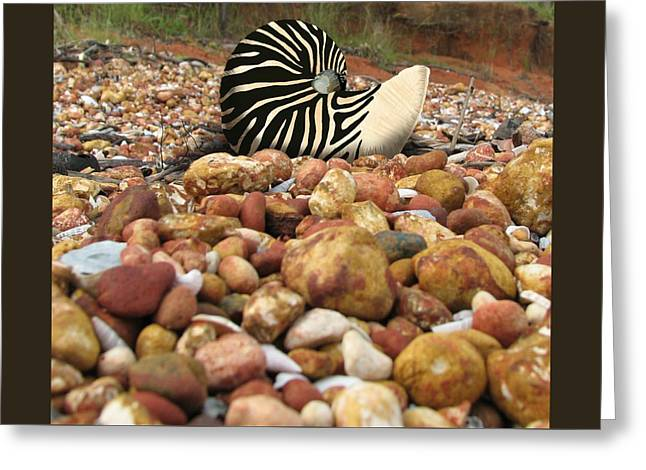 Zebra Nautilus Shell On Bauxite Beach Greeting Card