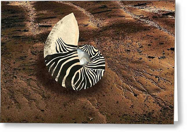 Zebra Nautilus Shell On The Sand Greeting Card