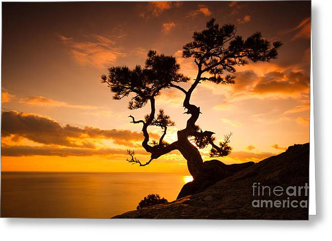 Zen Is A Tree On The Cliff Rocks And Greeting Card