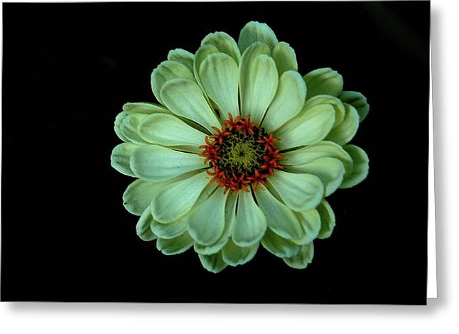 Zinnia Joy Greeting Card