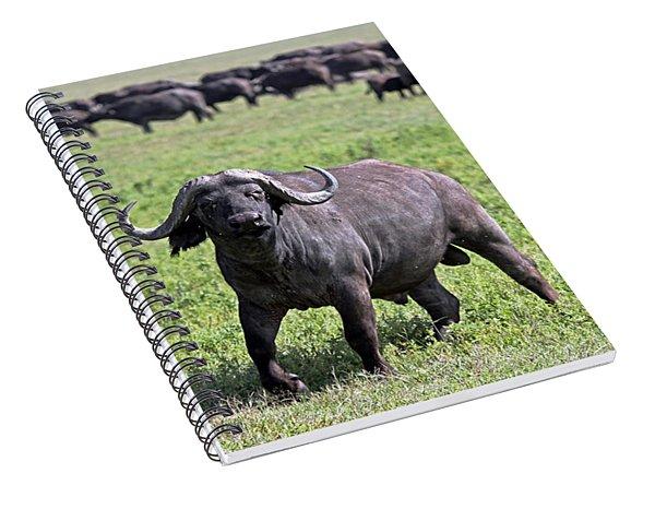 African Buffalo On Guard Spiral Notebook