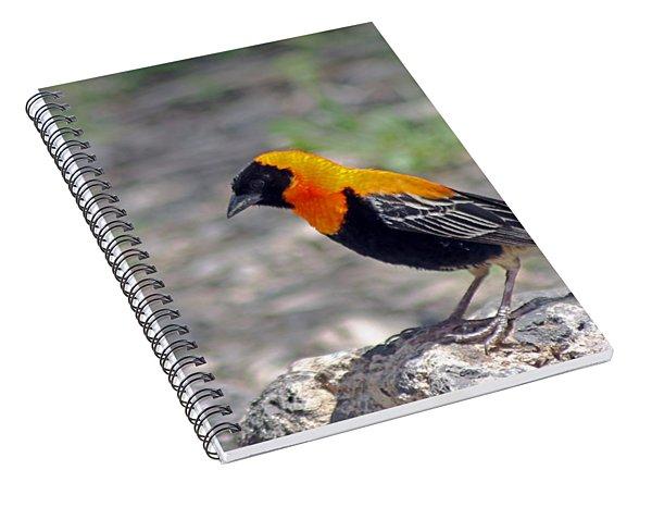 Black Bishop Weaver  Spiral Notebook