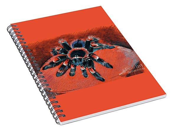 Brachypelma Smithi Redknee Tarantula  Spiral Notebook
