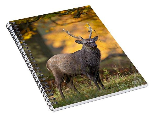 110307p073 Spiral Notebook