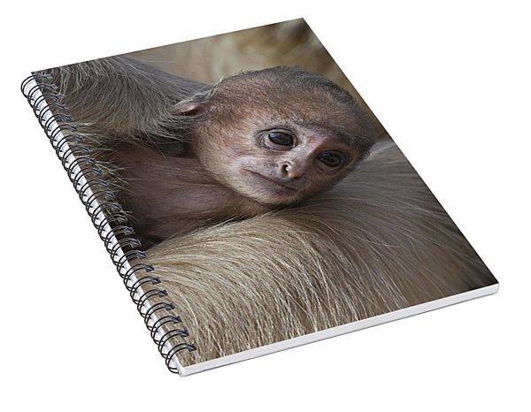 120820p269 Spiral Notebook