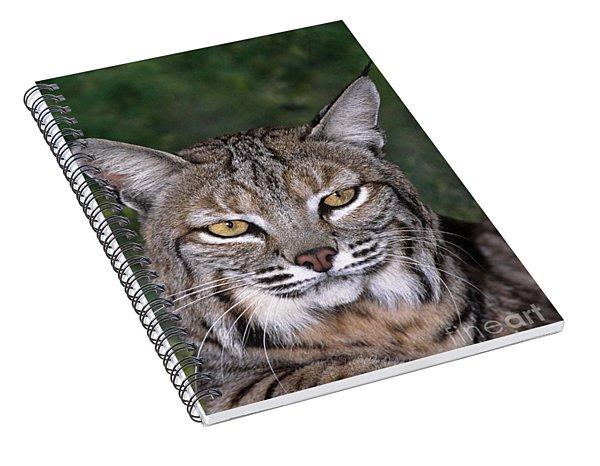 Bobcat Portrait Wildlife Rescue Spiral Notebook