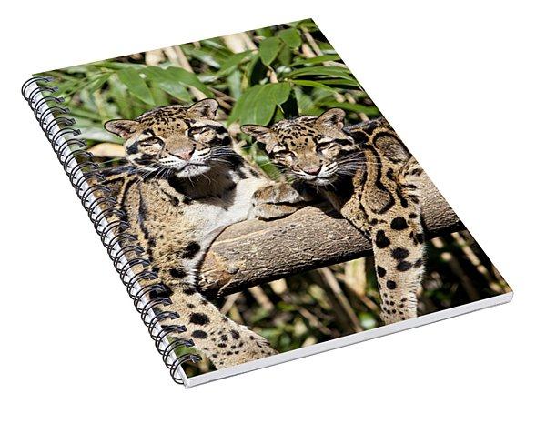 Clouded Leopards Spiral Notebook