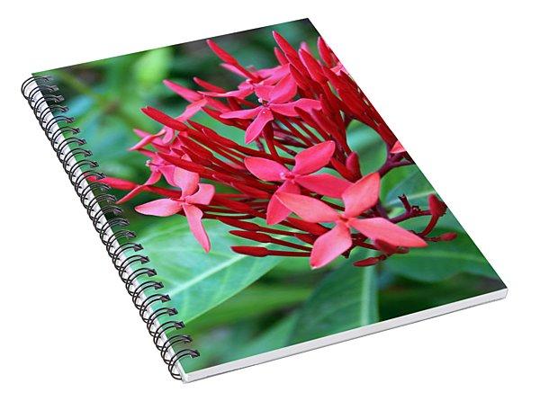 Jamaican Red Spiral Notebook