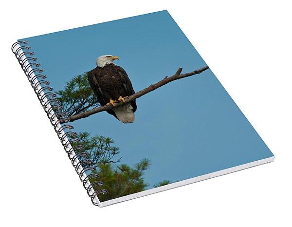 Out On A Limb Spiral Notebook