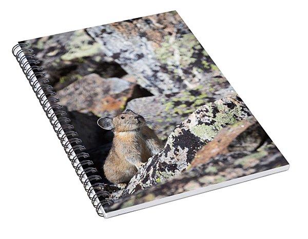 Pika Spiral Notebook