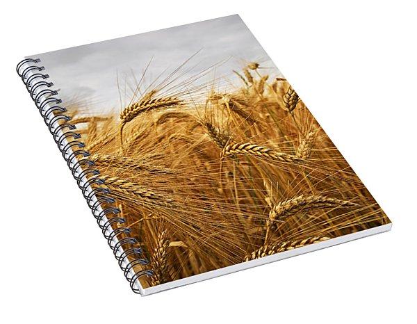 Wheat Spiral Notebook