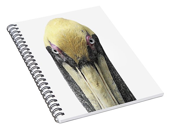 Brown Pelican-2 Spiral Notebook