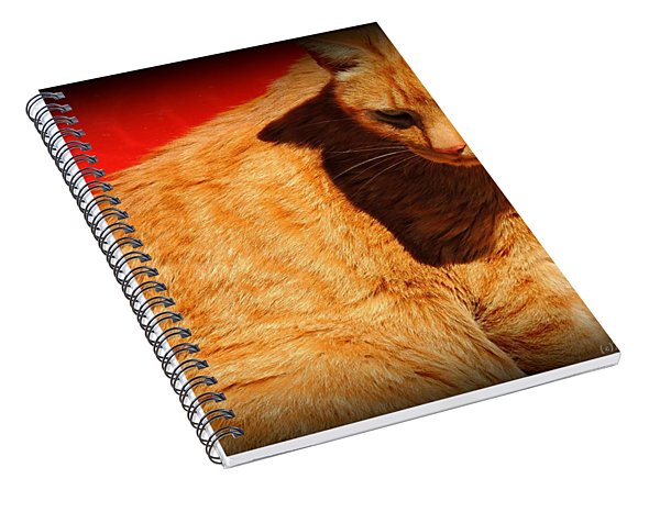 A Study Of Red And Orange Spiral Notebook