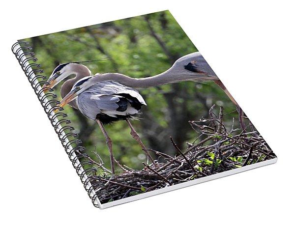Affectionate Great Blue Heron Mates Spiral Notebook