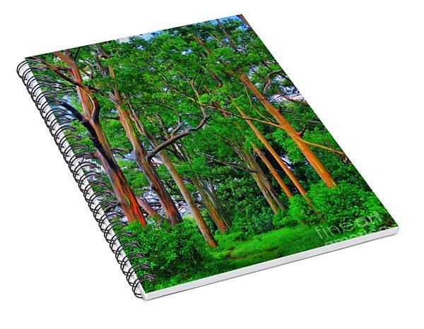 Amazing Rainbow Eucalyptus Spiral Notebook