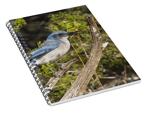 Amazing Scrub Jay Spiral Notebook