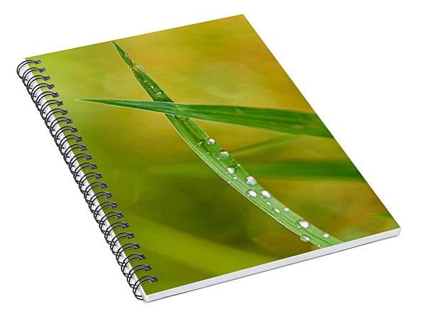 Ants Eye View Spiral Notebook