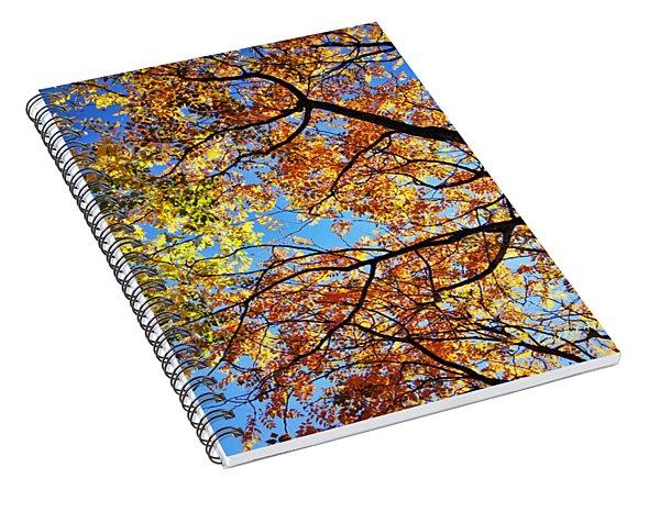 Autumn Afternoon Spiral Notebook