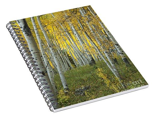 Autumn In The Aspen Grove Spiral Notebook