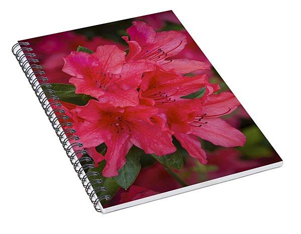 Azaleas 1 Spiral Notebook