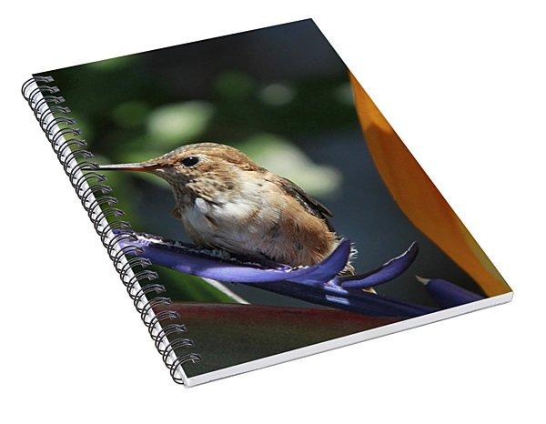 Baby Hummingbird On Flower Spiral Notebook