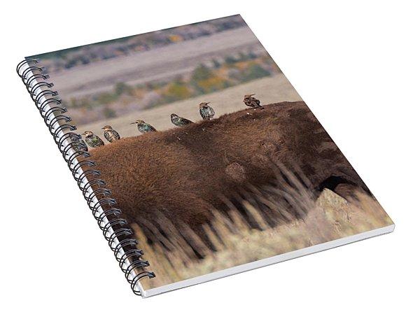 Bison And Buddies Spiral Notebook