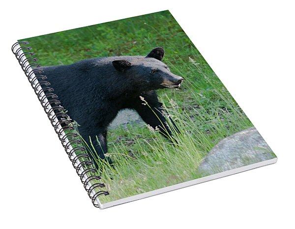 Black Bear Female Spiral Notebook