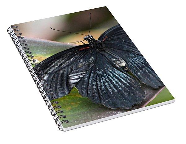Black Butterfly Spiral Notebook