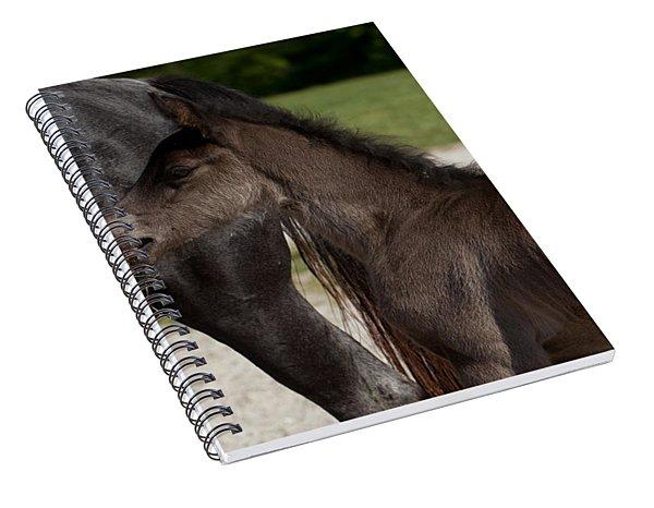 Black Foal Spiral Notebook