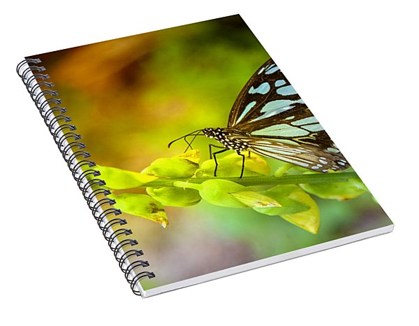 Blue Butterfly With Beautiful Colors Spiral Notebook