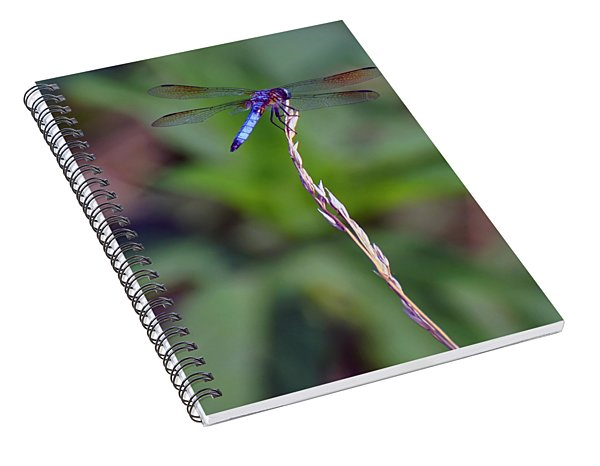 Blue Dragonfly On A Blade Of Grass  Spiral Notebook