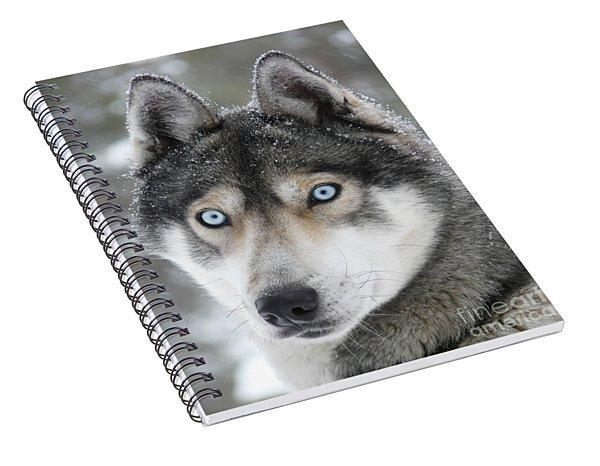 Blue Eyes Husky Dog Spiral Notebook