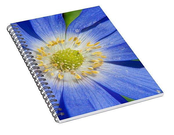 Blue Swan River Daisy Spiral Notebook