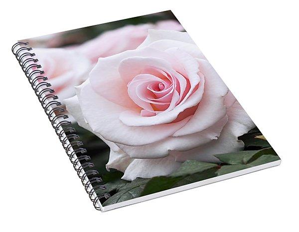 Blush Pink Roses Spiral Notebook