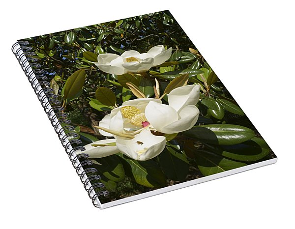 Busy Bee In A Magnolia Blossom 2 Spiral Notebook