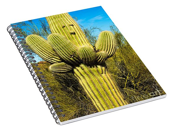 Spiral Notebook featuring the photograph Cactus Face by Mae Wertz