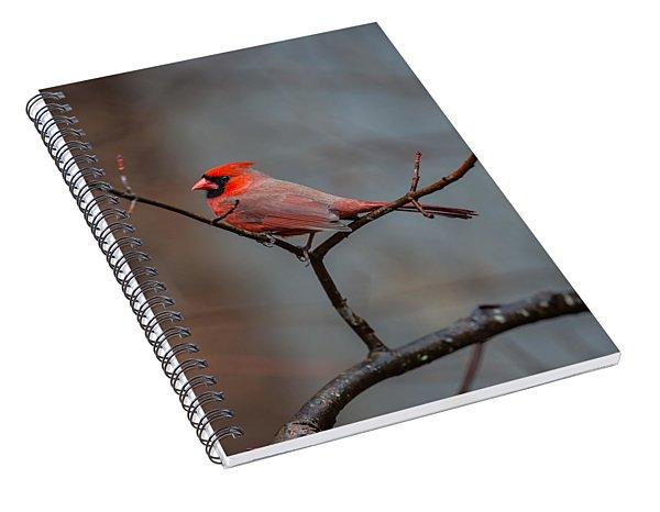 Cardinal Sing Spiral Notebook