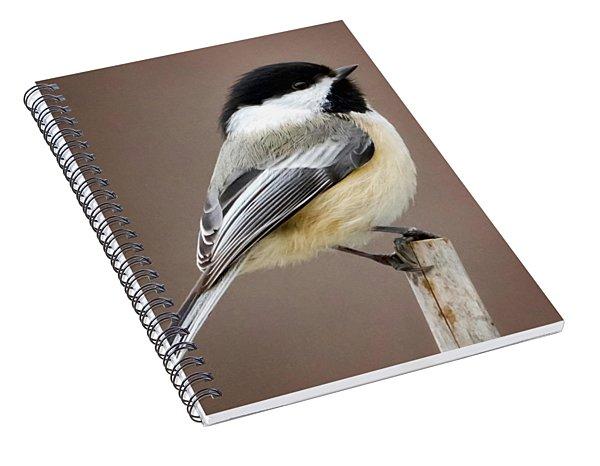 Chickadee Square Spiral Notebook