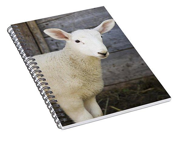Close Up Of A Baby Lamb Spiral Notebook