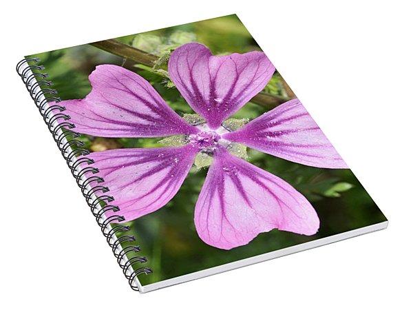 Common Mallow Flower Spiral Notebook