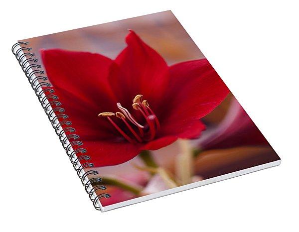 Content Tropics Spiral Notebook