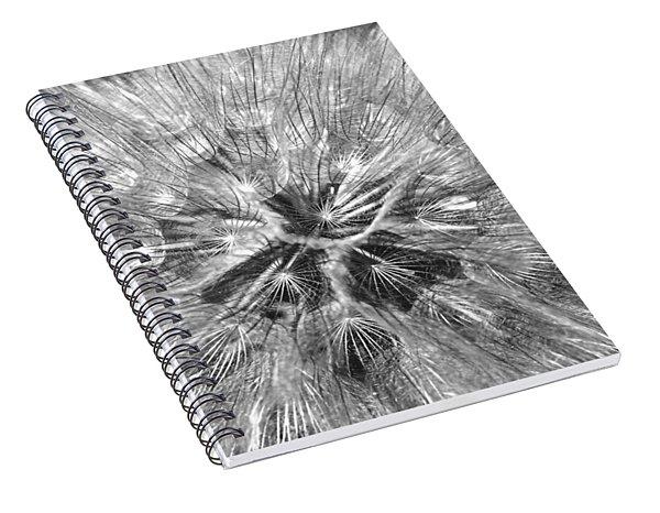 Dandelion Fireworks In Black And White Spiral Notebook