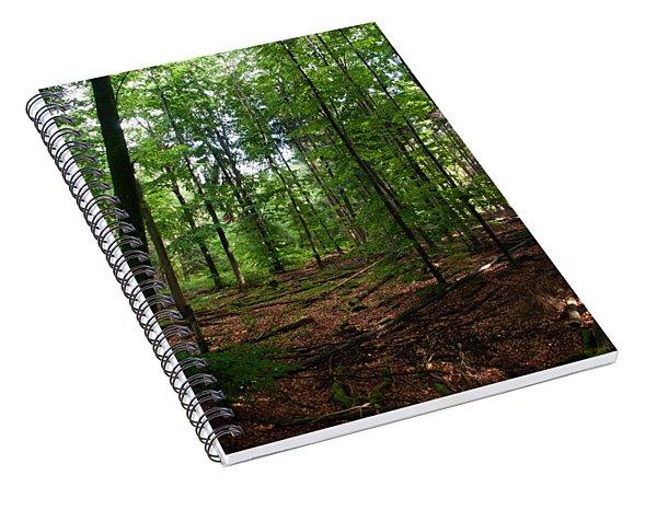 Deep Forest Trails Spiral Notebook