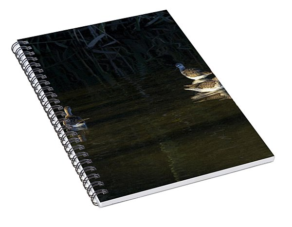 Digital Oil Of Sandpipers Spiral Notebook
